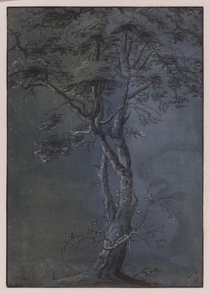 Study of a tree - birch (?)