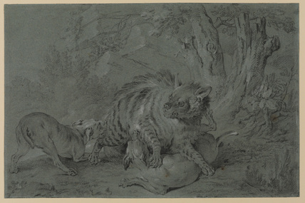 A striped hyena fighting two dogs