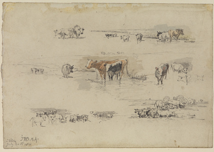 Studies of cows in landscape settings