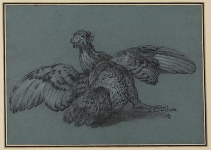 Cockerel spreading its wings