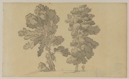 Two trees - near Dulwich College