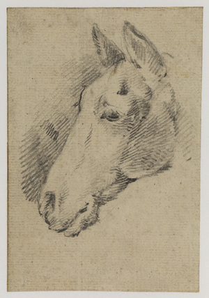 Head of a horse