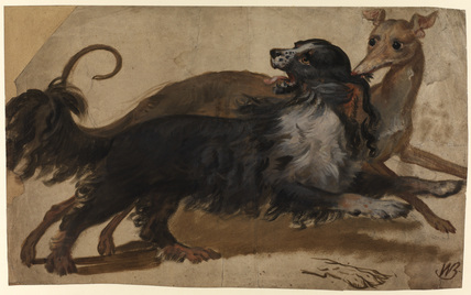 Two dogs - study for 'Portrait of Queen Charlotte' (Courtauld Gallery) (recto)