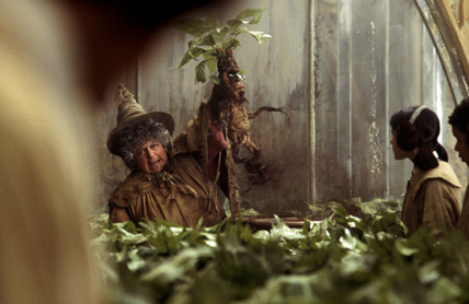 Professor Sprout holding up a Mandrake