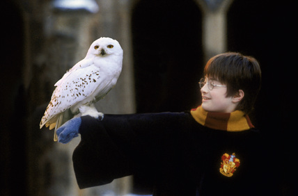 Harry with Hedwig on arm
