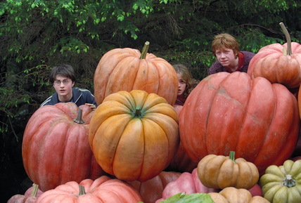 Harry, Ron & Hermione hiding behind pumpkins