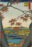 Maple Trees at Mama, Tekona Shrine, and Linked Bridge