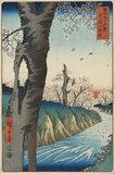 Koganei in Musashi Province