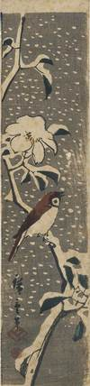 Bird with brown wings & white breast on flowering spray, snow covered