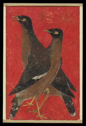 Two myna birds