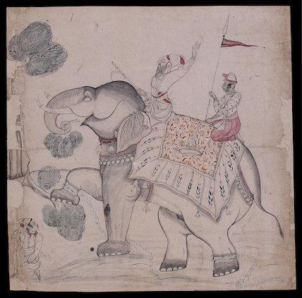 Elephant eating a tree