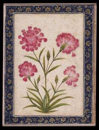 Botanical study of a carnation
