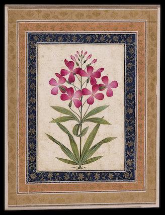 Botanical study of a geranium