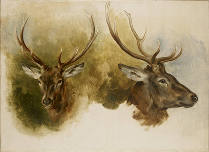 Two Studies of a Stag's Head, oil on canvas