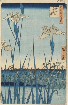 Horikiri no hana shoubu. Horikiri Iris Garden No.64