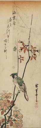 Crested bird with green & pink plumage on a spray of peach blossom