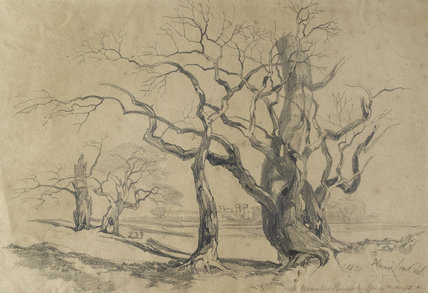 Oak Trees at Knowsley, 1839