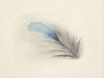 Feather of a Kingfisher's Back, enlarged