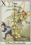 Yellow Deadnettle Fairy