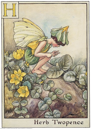 Herb Twopence Fairy