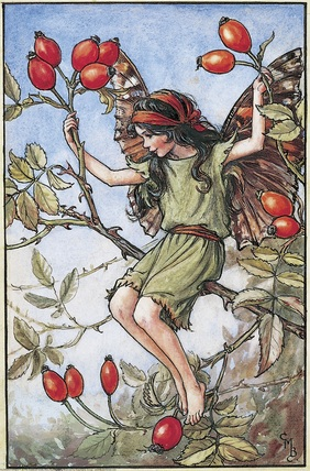 Rose Hip Fairy