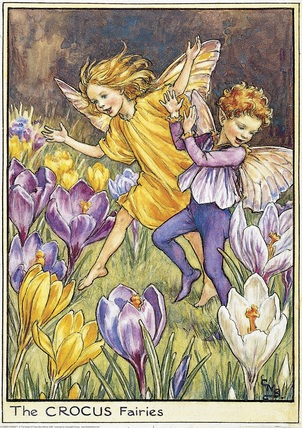 http://www.flowerfairiesprints.com/image/228796/cicely-mary-barker-crocus-fairies