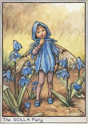 Scilla Fairy
