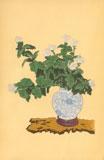 White Chrysanthemum, Shiragiku. (Heikwa) vessel: Sometsuke Round Vase