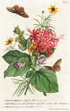 1.Ceratocephalus, 2. Martynia, 3. Narcissus
