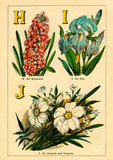 H for Hyacinth, I for Iris, J for Jonquil and Jasmine