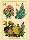 K for Kalmia, L for Larkspur, M for Marigold and Mignonette.