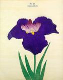 Iris Yedo-Jiman