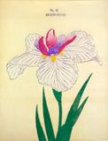 Iris Akashi-No-Ue