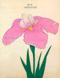 Iris Oyoku-Ho-Ren