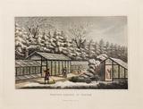 Forcing garden, in Winter