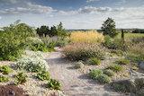 The Dry Garden in summer at RHS Garden Hyde Hall.