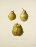 Beurre d'Arenberg, Gloux Morceau, Duchesse d'Angouleme