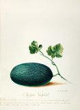 Melon de Malaga