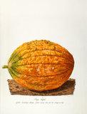 'Grande Cantaloupe oblongue'
