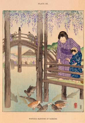Wisteria blossoms at Kameido