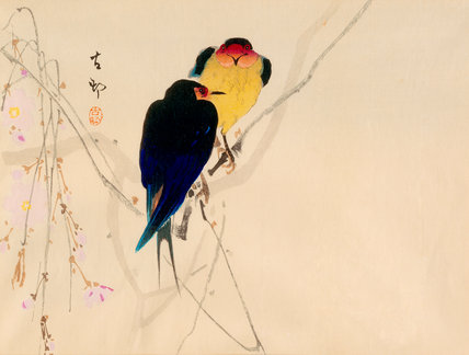 Swallows with blossom