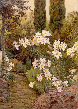 Consider the lilies, Dyffryn