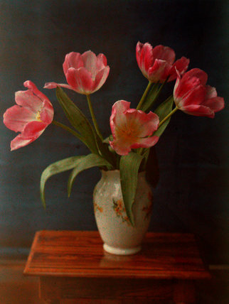 Five pink tulips in a vase