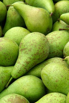 Pyrus communis, Pear