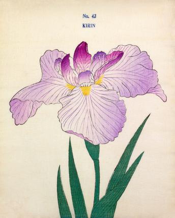 Iris Kirin
