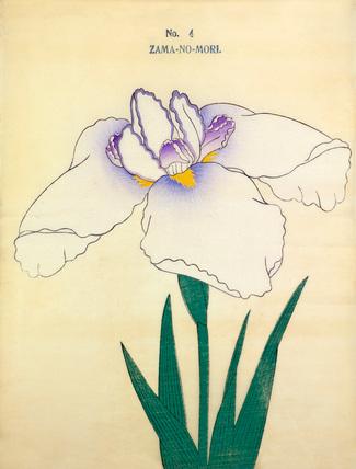 Iris Zama-No-Mori