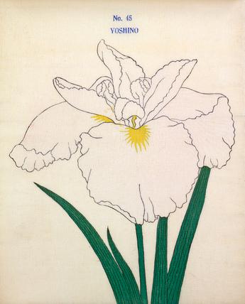 Iris Yoshino