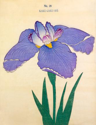 Iris Kaku-Jaku-Ro
