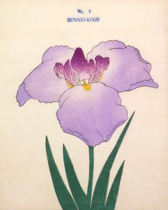 Iris Bunmei-Kogo