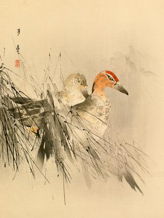 Ducks in reeds